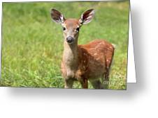 Baby In The Tall Grass Greeting Card