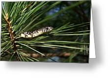 Baby King Snake Greeting Card