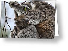 Baby Koala V2 Greeting Card