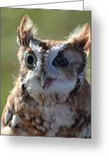 Cute Screetch Owl Greeting Card
