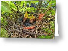 Baby Mockingbirds Greeting Card