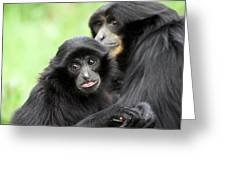 Baby Monkey And Mother Greeting Card