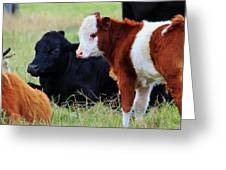 Baby Of The Herd Greeting Card