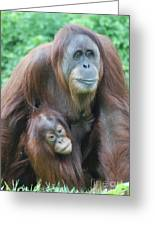 Baby Orangutan Clinging To His Mother Greeting Card