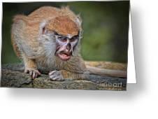 Baby Patas Monkey On Guard  Greeting Card