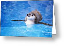 Baby Penguin Floating Greeting Card