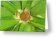 Baby Pinapple Greeting Card