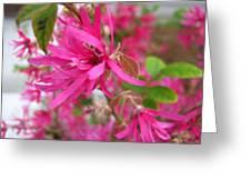 Baby Pink Chinese Fringe Greeting Card