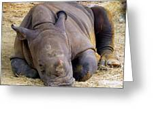 Baby Rhino Resting Greeting Card