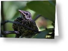 Baby Robin Greeting Card