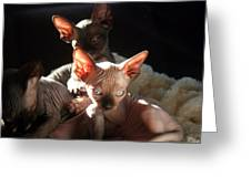 Baby Sphynx Cats  Greeting Card