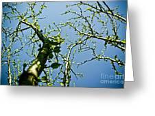 Baby Spring Tree Leaves 02 Greeting Card