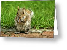 Baby Squirrel's First Peanut Greeting Card