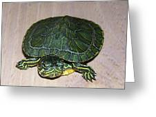 Baby Turtle Looking Up Greeting Card