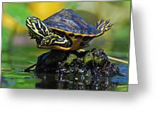Baby Turtle Planking Greeting Card by Jessie Dickson