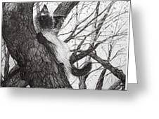 Baby Up The Apple Tree Greeting Card