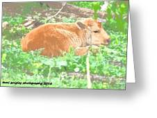 Baby's Home On The Range Greeting Card