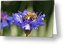 Bachelor Button And Bee Greeting Card
