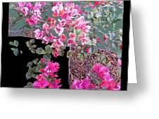 Back Door Bougainvillea Greeting Card by Eikoni Images