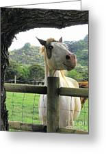 Back Fence Gossip Greeting Card
