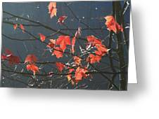 Back Light Mapel Greeting Card