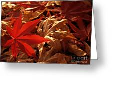 Back-lit Japanese Maple Leaf On Dried Leaves Greeting Card