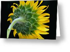 Back Of Sunflower Greeting Card