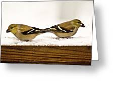 Back To Back American Gold Finches Greeting Card
