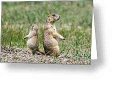 Back To Back Prairie Dogs Greeting Card