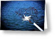 Back To The Bay Blue Crab Greeting Card
