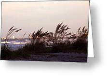 Back To The Shores Greeting Card