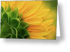 Back View Of Sunflower Greeting Card