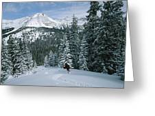 Backcountry Skiing Into An Evergreen Greeting Card by Tim Laman