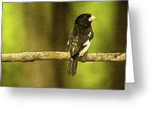 Backed Up Rose Breasted Grossbeak Greeting Card
