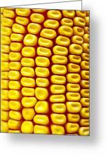 Background Corn Greeting Card