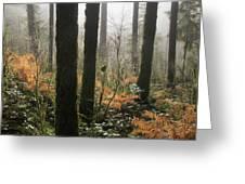 Backlit Bracken Ferns Greeting Card