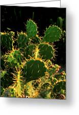 Backlit Cacti Greeting Card