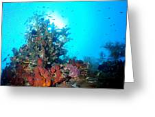 Backlit Coral Greeting Card