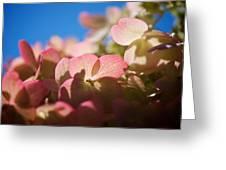 Backlit Hydrangea Greeting Card
