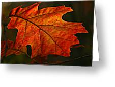 Backlit Leaf Greeting Card