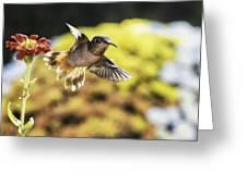 Backlit Greeting Card