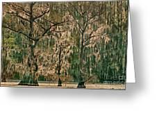 Backlit Moss-covered Trees Caddo Lake Texas Greeting Card