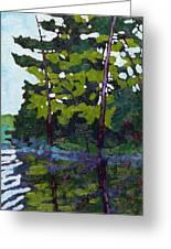Backlit Pines Greeting Card