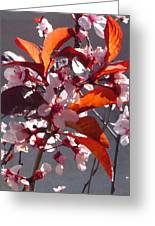 Backlit Pink Tree Blossoms Greeting Card