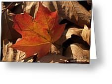 Backlit Sugar Maple Leaf In Dried Leaves Greeting Card