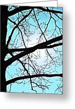 Backlit Tree Greeting Card