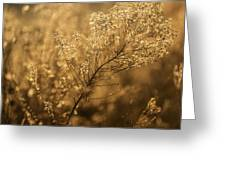 Backlit Wildflower Seeds In Autumn Greeting Card