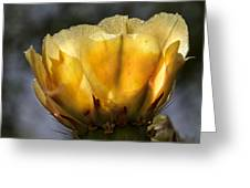 Backlit Yellow Cactus Flower Greeting Card