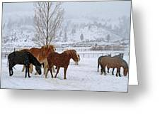 Backs To The Wind Greeting Card