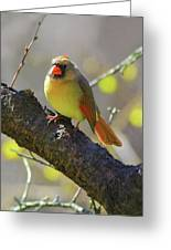 Backyard Bird Female Northern Cardinal Greeting Card